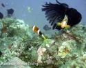 bohol-diving